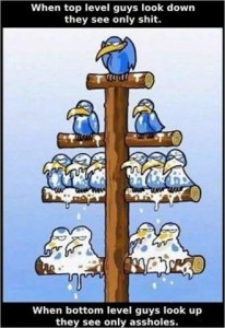 bird hierarchy